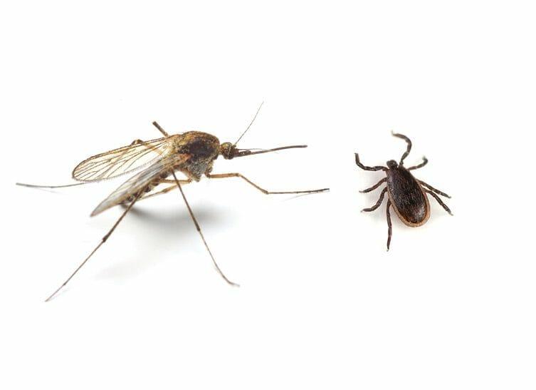 Mosquitos and Ticks